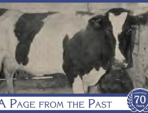 "1969: ""Wisconsin Cows Go to School"""
