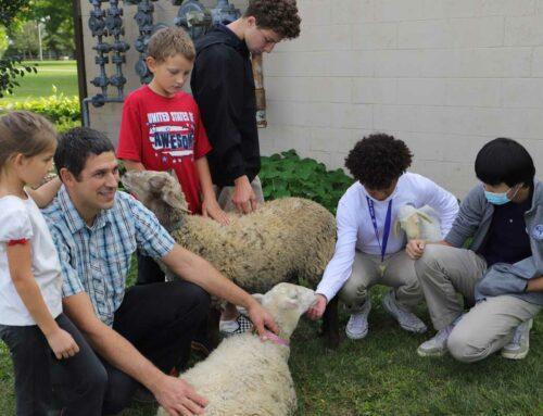 Lambs Visit Bible III Class