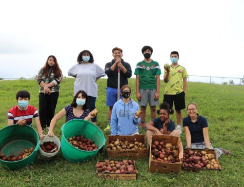 Home Ec Students Dig Potatoes